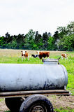 Traditional mobile water tank and cows Royalty Free Stock Photo