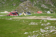 Traditional norwegian colorful houses ,Lofoten islands, Norway Royalty Free Stock Image