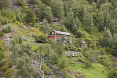 Traditional norwegian wooden house on a green forest hill landsc Royalty Free Stock Photo