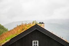 Free Traditional Norwegian Wooden House With Grass Roof Royalty Free Stock Photos - 125749568