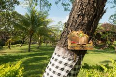 Traditional offerings at Bali Stock Image