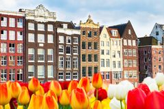 Traditional old houses and tulips view in Amsterdam, Netherlands Stock Images