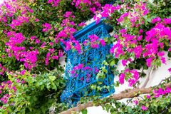 Traditional old painted window and magenta flowers, Sidi Bou Said, Tunisia, Africa stock photos