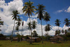 Traditional and original village with palmtrees in West Papua. A view at an original village in West papua with the big palmtrees standing inbetween the wooden royalty free stock photos