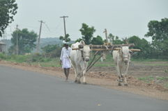 Traditional plough in India Stock Photo