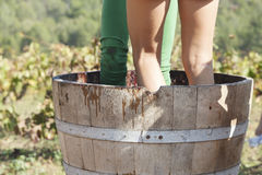 Traditional Pressing Grapes. The human legs pressing grapes in a traditional form Royalty Free Stock Images