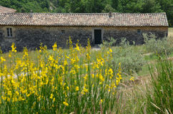 Traditional Provencal house in yellow field Royalty Free Stock Photos
