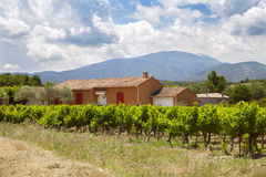The traditional provence house and a vineyard Royalty Free Stock Photography