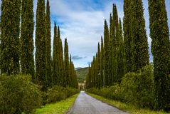 A traditional public countryside road lined with cypresses. In Tuscany - 1 Stock Photos