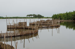Traditional reed fishing traps used in wetlands near the coast in Benin. These walls lead the fish into narrow traps where they can be collected Royalty Free Stock Photo