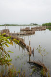 Traditional reed fishing traps used in wetlands near the coast in Benin. These walls lead the fish into narrow traps where they can be collected Royalty Free Stock Photos