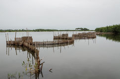 Traditional reed fishing traps used in wetlands near the coast in Benin. These walls lead the fish into narrow traps where they can be collected Stock Photography