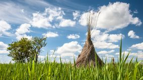 Traditional reed harvesting for thatched roofs Royalty Free Stock Images