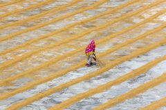 Traditional Rice Mill Worker turn over paddy for drying. In the sun at Ishwardi Upazila, Pabna District in Rajshahi Division, Bangladesh stock photo