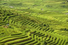 Traditional rice terrace fields in Mu Cang Chai to SAPA region Vietnam. Traditional rice terrace fields in SAPA region, northern Vietnam royalty free stock image
