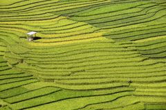 Traditional rice terrace fields in Mu Cang Chai to SAPA region Vietnam. Traditional rice terrace fields in SAPA region, northern Vietnam royalty free stock photos
