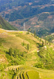 Traditional rice terraced field Stock Images