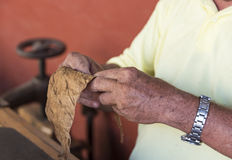 Traditional Rolling Cigars in Cuba Stock Photo