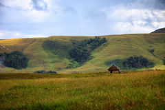 Traditional round hut in savanna with cloud raising from the gro Royalty Free Stock Photos