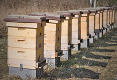 Traditional rural beekeeping, South Bohemia Stock Photo