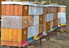 Traditional rural beekeeping, South Bohemia. Czech Republic royalty free stock images
