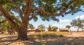 Traditional Giriama community with mango tree Royalty Free Stock Photos