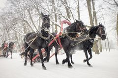 Traditional russian black troika. Three horses pull sleigh in winter snowy day. Traditional russian black troika Royalty Free Stock Photography
