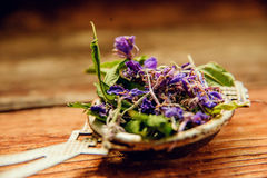 Traditional russian green herbal tea from Fireweed leaves: Koporye Tea, Russian Tea or Ivan Chai. Stock Images