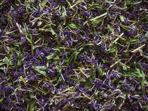 Traditional russian green herbal tea from Fireweed leaves: Koporye tea, Russian tea or Ivan Chai. Stock Photography