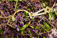 Traditional russian green herbal tea from Fireweed leaves: Koporye Tea, Russian Tea or Ivan Chai. Royalty Free Stock Photography