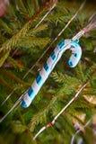 Traditional Santa cane on spruce branch taken closeup. Royalty Free Stock Image