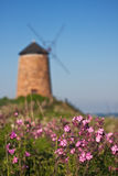 Traditional Scottish coastal windmill with flowers Stock Photography