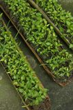 Traditional seed tray Stock Image