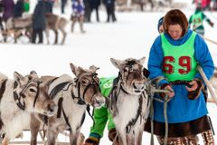 Traditional sleigh race with deer royalty free stock photography
