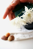 Traditional spa and health. Wooden bowl with fresh red and white chrysanthemums and natural pebbles on white with copyspace. Suitable for spa and relaxation Royalty Free Stock Photos