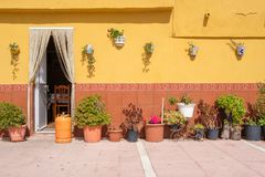 Yellow wall with flower pots. Stock Photography