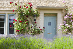 Traditional stone house with blue doors, red roses, flowering lavender Stock Photos
