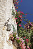 Traditional stone house with lantern and window. Overgrown with red flowers in Croatia Stock Photo