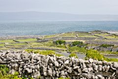 Stone walls in Inisheer, Aran Islands, Ireland. Traditional stone walls in Inis Oirr, Aran Island, Ireland Stock Photo