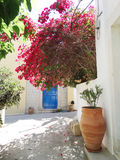 Traditional street among bougainvillaea in rethymno city Greece Stock Image