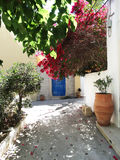 Traditional street among bougainvillaea in rethymno city Greece Stock Images