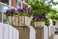 Traditional street decoration with violets in Zandvoort Stock Photos