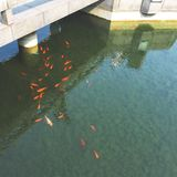 traditional suzhou garden stock images
