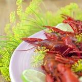Traditional swedish crayfish holiday meal Royalty Free Stock Image