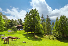 Traditional swiss farm house Royalty Free Stock Image