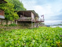 Traditional thai home style near the river in Thailand with beautiful water hyacinth blue sky. Stock Image