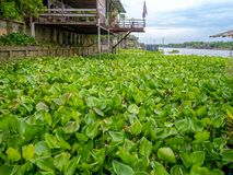 Traditional thai home style near the river in Thailand with beautiful water hyacinth blue sky. Stock Photo
