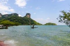Traditional Thai sea mangroves . Royalty Free Stock Photo