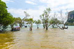 Traditional Thai Longtail boatin mangroves . Stock Photography