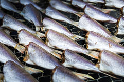 Traditional Thai salted fish Stock Image